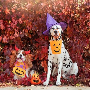 Canine Halloween Hazards