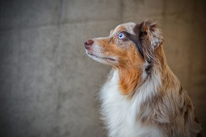 Seven Serious Diseases that Affect Popular Breeds