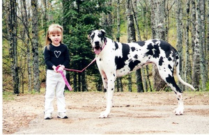 Merging Science and Art: Using Genetic Testing to Produce the Seven Standard Great Dane Coat Colors and Patterns