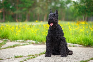 Paw Print Genetics Launches 15 New Tests