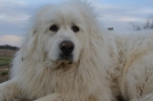 Dirty Dozen: Best Dog Breeds for Winter