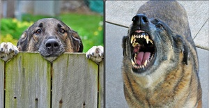Dog Bites Cost Homeowners $489 Million in 2012