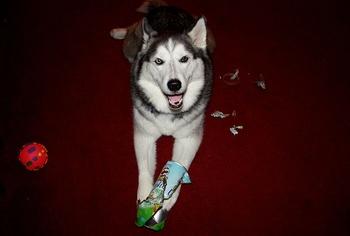 The Spiteful Dog- A Separation Anxiety Myth