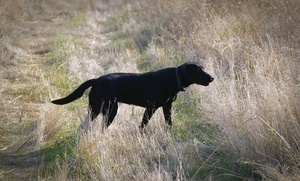Paw Print Genetics: A new approach to canine inherited disease testing