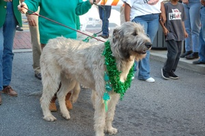 Dog Breeds of Irish Origin: Part 1 - Non-terrier Breeds