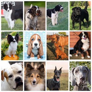 Paw Print Genetics Launches Twelve New, Highly Desired Disease Tests