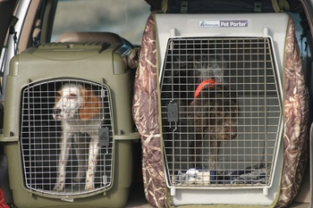 Ten Top Hunting Dogs