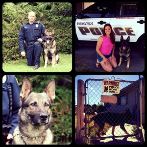 Taking a Bite Out of Crime: Paw Print Genetics and K-9 Police