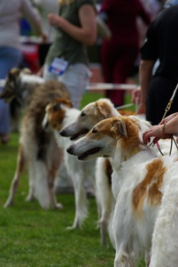 Tri Cities Kennel Club Dog Show