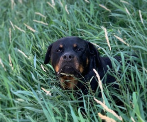 The Veterinarians Corner- 2021: A Banner Year for Canine Genetic Health