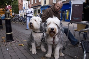 Preventable Inherited Diseases of the Old English Sheepdog- Part Two