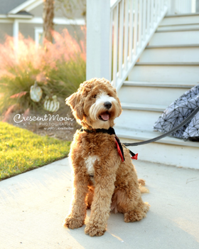 I thought customer service was dead...Paw Print Genetics proved me wrong.  By Justin Riegsecker, JARS Labradoodles
