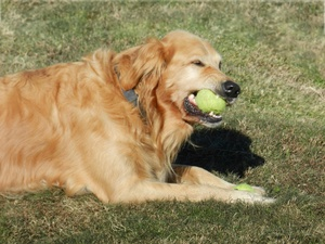 Six Common Training Mistakes that Hamper a Dog's Ability to Learn