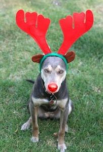 Are you helping your dog stay on Santa's good dog list?