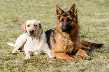 Paw Print Genetics Launches 46 New Tests for Dogs