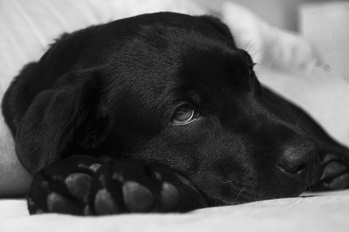 Genetic Testing of the Symptomatic Dog