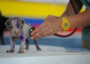 Paw Print Genetics Can Help You Better Integrate Genetic Testing Into Your Veterinary Practice