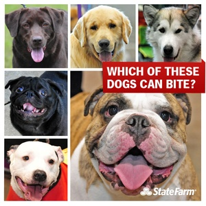 Top 10 States for Dog Bites and Tips to Avoid Bites