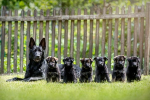 Paw Print Genetics Launches Clear by Parentage Certificate Program