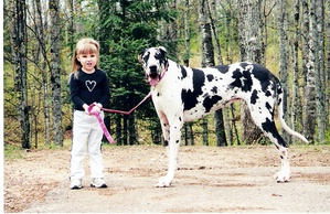 Breed of the Week: Great Dane