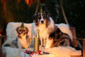 Happy New Year from Paw Print Genetics