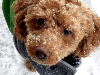 Canine Care When Arctic Temps Hit