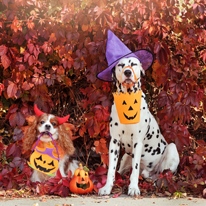 Canine Halloween Hazards
