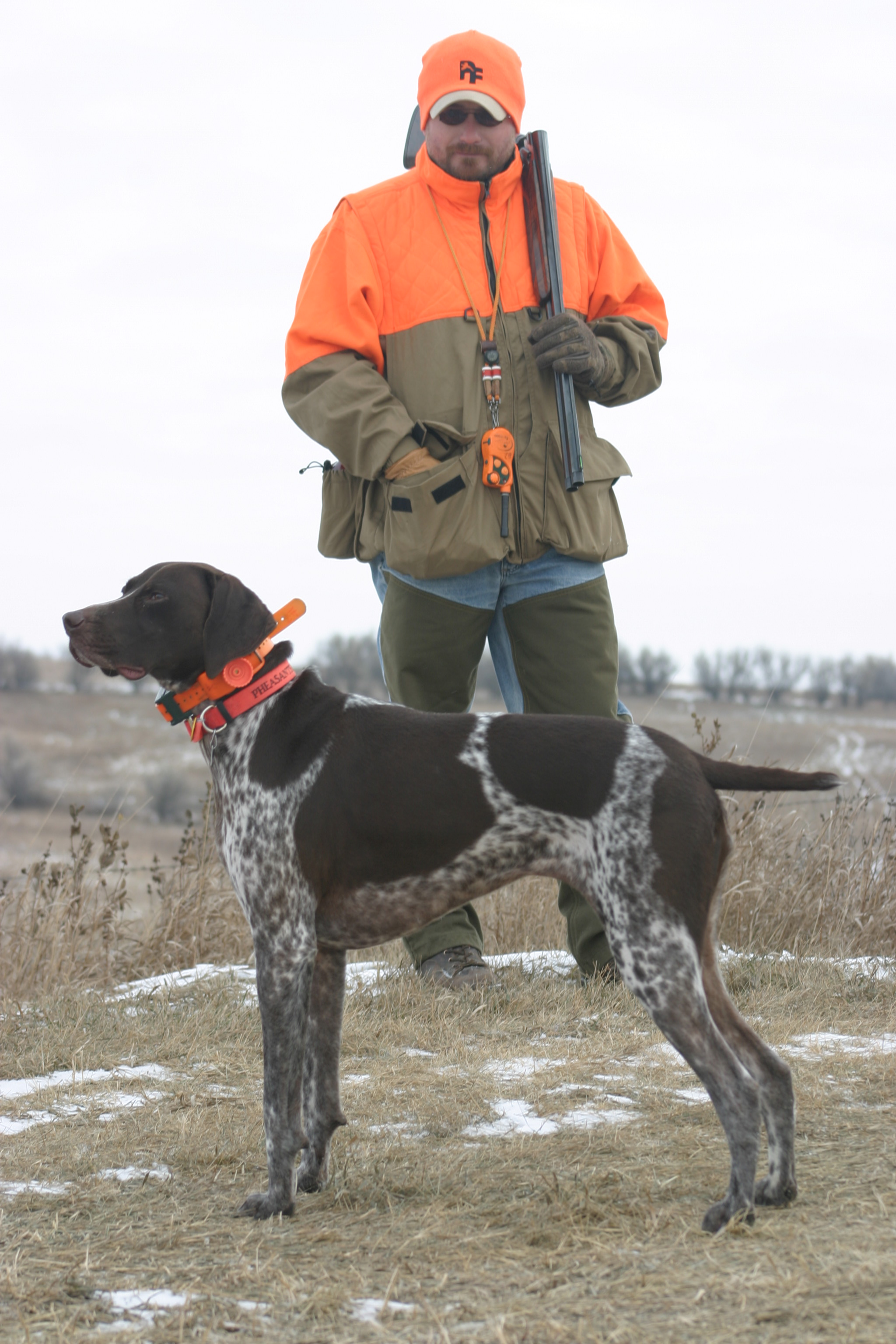 Paw Print Genetics - Breed of the Week: German Shorthaired Pointer