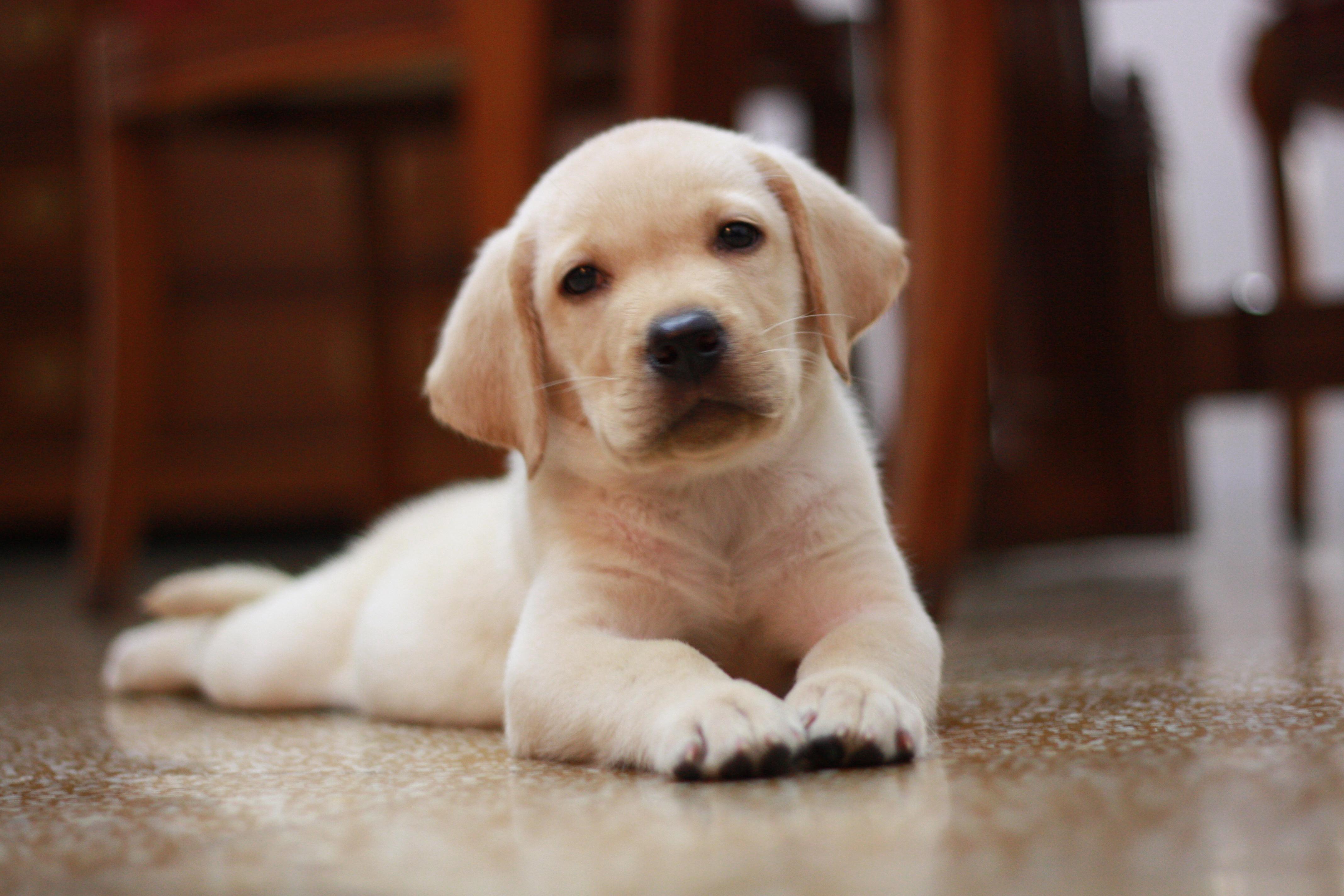 Paw Print Genetics - Understanding complex inherited diseases in your dog